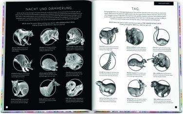 Magische Welten. Entdecke verborgene Lebensräume mit der Zauberlupe! - mit Illustrationen von Carnovsky, Text von Rachel Williams (2)